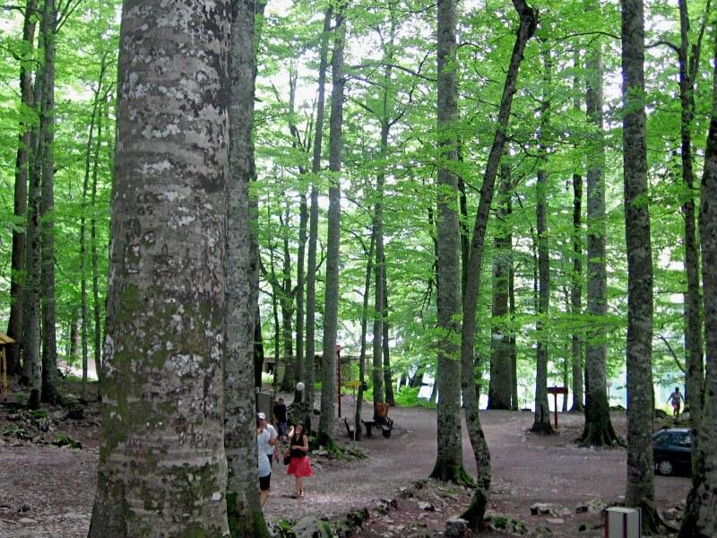 Лес парка Биоградская гора