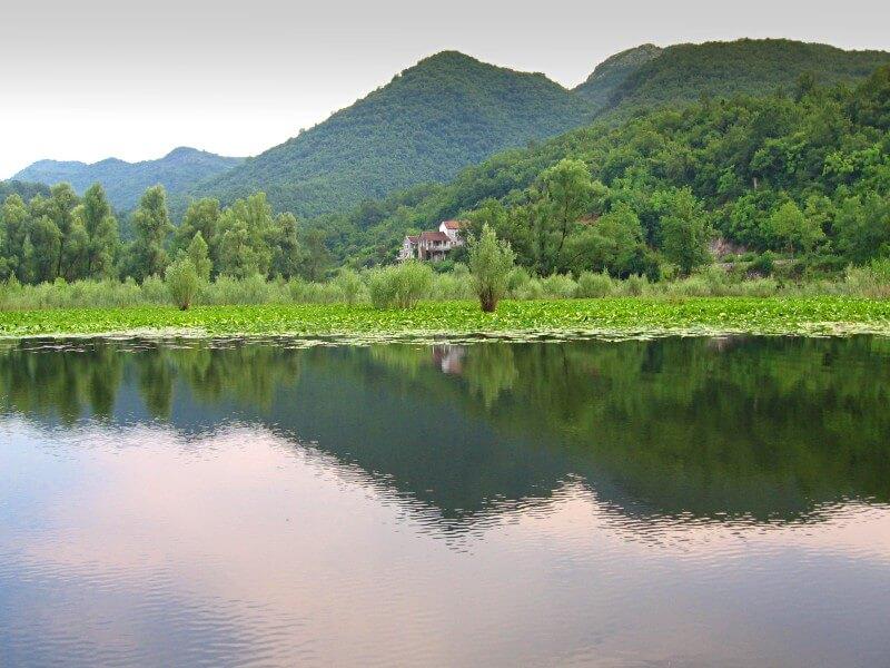 Скадарское озеро начало экскурсии Черногория