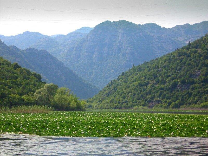 Скадарское озеро 3