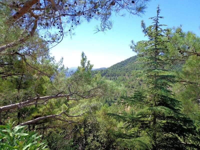 В горах Троодос Кипр