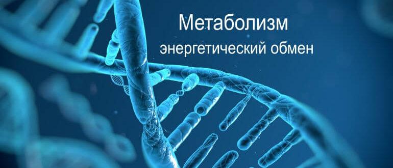 Метаболизм энергетический обмен