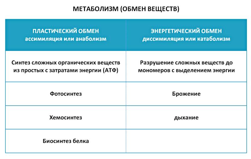 Таблица метаболизм
