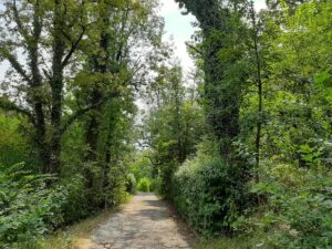 лесопарковая зона