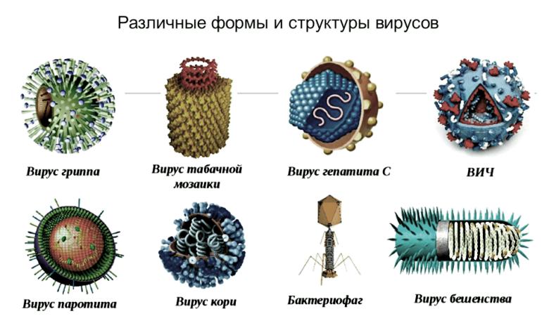 формы и структуры вирусов